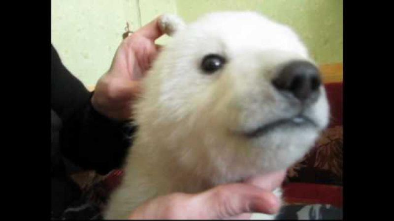 Айон - белый медвежонок