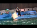 Дельфинарий СПб, дельфин белуха Полина
