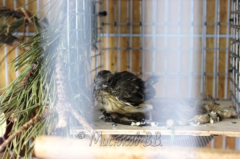 Фотографии моих птиц  - Страница 2 GNDy0B-RXEU