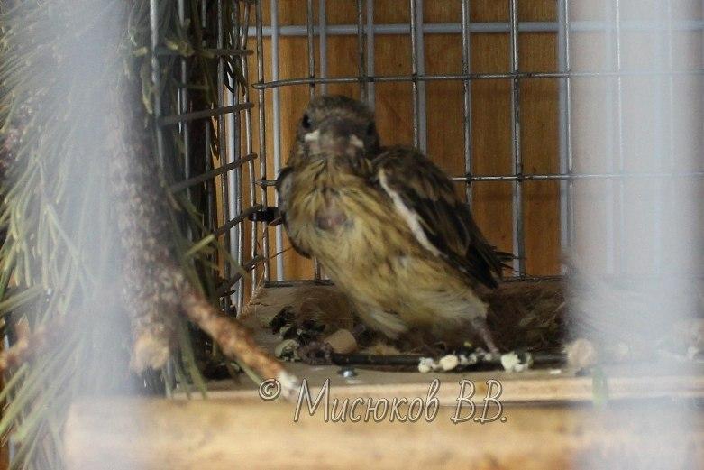 Фотографии моих птиц  - Страница 2 FNR5sEA8A-4