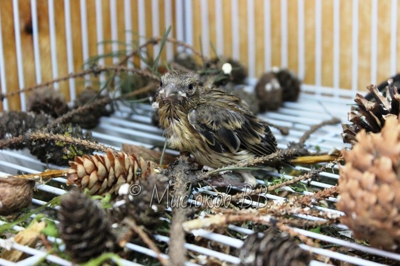 Фотографии моих птиц  - Страница 2 JlGl5dQlIrs