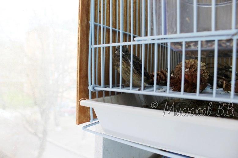 Фотографии моих птиц  - Страница 2 6Adrn0yAeW8