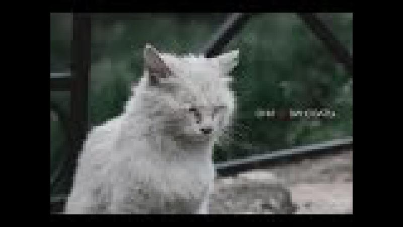 Социальная реклама про бездомных животных. ОНИ НЕ ВИНОВАТЫ