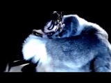 IAMX - 'Tear Garden' (Official Video)