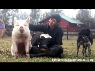 Все животные хотят любви