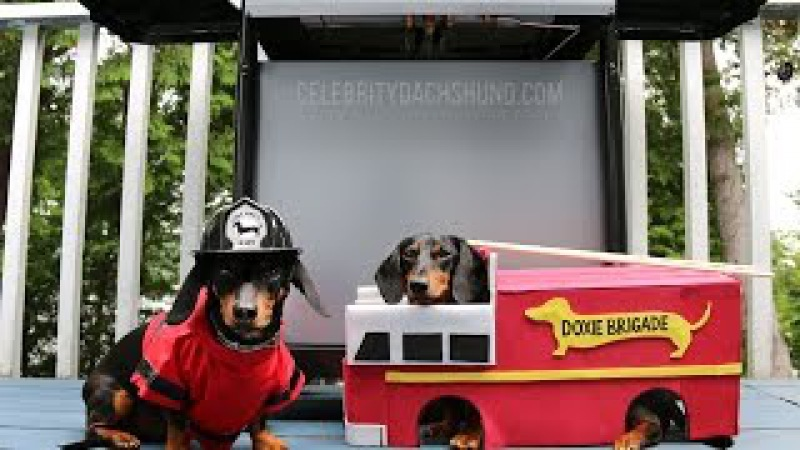 Best Vine Video Compilation by Crusoe Celebrity Dachshund 2014