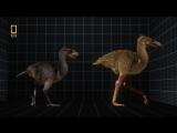 Доисторические хищники. Хищные птицы-ящеры   Prehistoric Predators. Terror Raptor   2009