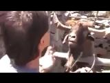 Тот случай когда все твои аргументы в споре пустой звук ;D Забавные видео приколы с животными.
