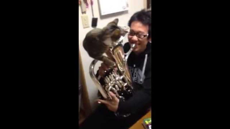 Cat mute for euphonium