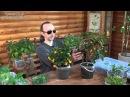 Быстрое выращивание растений. Введение в тему выращивания тропических плодовых. От Фролова Ю. А.