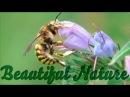 Потрясающе красивая природа - релакс и позитив! Макро съемка. Видео YouTube