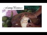 Chặt dừa siêu độc đáo, secures the world's most unique coconut