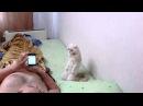 Кот встает когда звучит гимн России