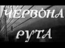 «Червона рута» Р. Олексив 1971 г., Фильм-концерт