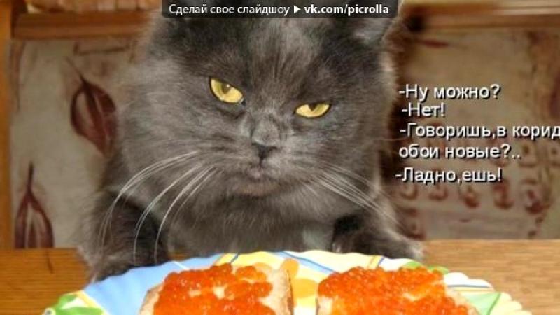 «Коты» под музыку KReeD - Слово - Люблю Потеряло Свой Смысл [Любовь в сети] [СТИРАЕМ СКОБКИ ПРИ ДОБАВЛЕНИИ К СЕБЕ]. Picrolla
