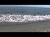 Звуки Тихого Океана, волны, шум прибоя!