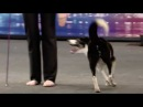 HiDef - BGT - Kate Gin Canine freestyle 16:9 widescreen