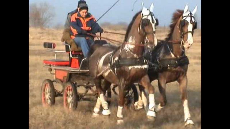 Fogathajtás Sanyi fogata 2012 01 03.