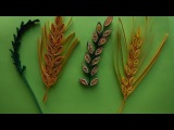 How to make Quilling Wheat GrainLeaf Stem using Comb