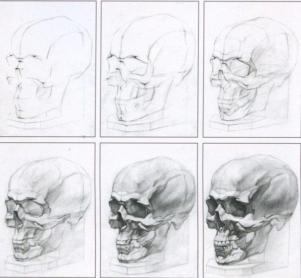 Сначала учимся рисовать череп,