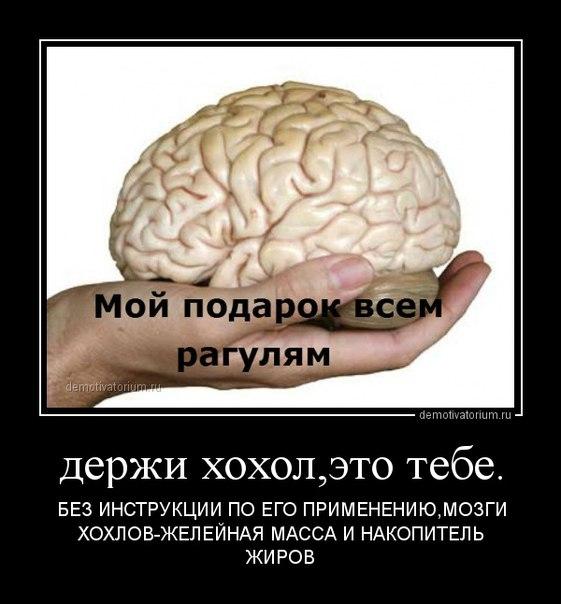 Мозг укропа