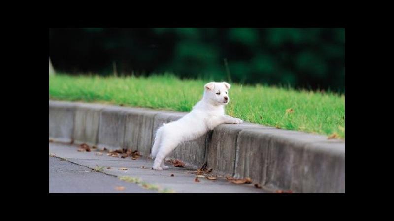 Переводчик с собачьего с Цезарем Милано Как воспитывать щенка