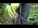 Как выкапывать и хранить гладиолусы Сайт Садовый мир