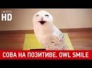 Сова смеется / Laughing Owl HD