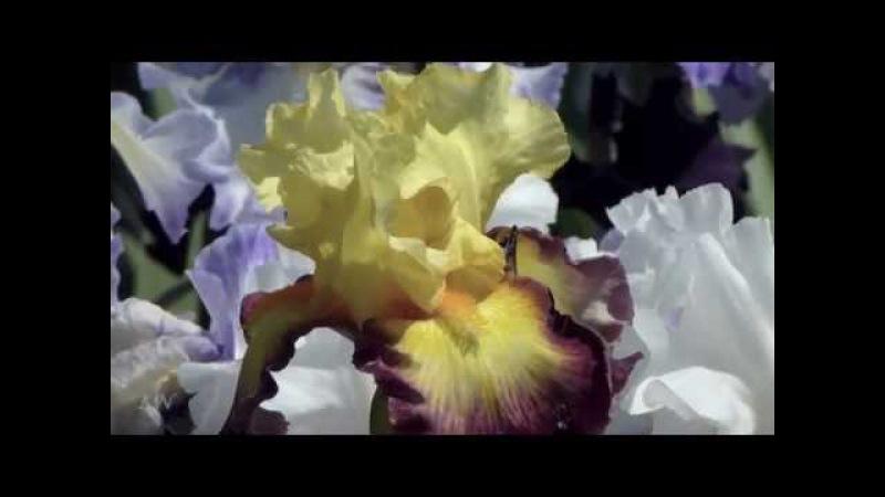 Весенняя нежность... Francis Goya - At The Border Of Leaving - Spring tenderness