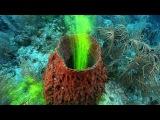 Sponges! JONATHAN BIRD'S BLUE WORLD