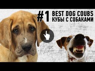 ЛУЧШЕЕ В COUB / ЛУЧШИЕ ПРИКОЛЫ С СОБАКАМИ И КОШКАМИ / FUNNY DOGS VIDEO COMPILATION (2015)