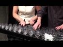 Это великолепно! Игра классики на бокалах. Musical glasses - Bach, Toccata and Fugue