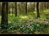 Я в весеннем лесу поёт Александр Орехов