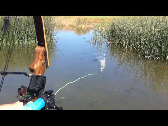 Bowfishing some common carp Summer 2010
