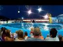 Дельфинарий Архипо-Осиповка, новая программа. Часть 1