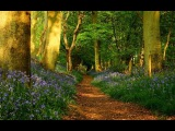 Релакс. Звуки безмятежной природы, птицы, ручей. Утро в лесу.