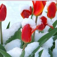 Самые красивые цветы в мире Интересные факты 16