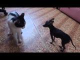 Очень смешные кот и собачка))))