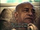 Шрила Прабхупада - Закончить курам насмех / Shrila Prabhupada - Finish the fun of chickens