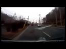 [WEBM] Телка четко водит машину