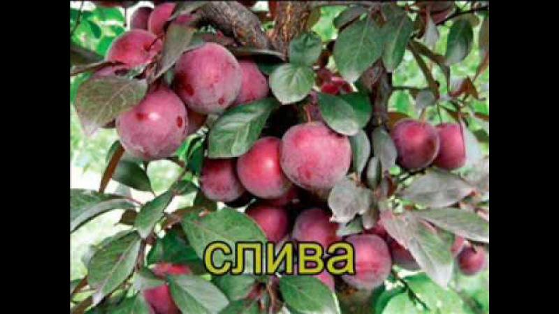 Караоке по-русски (СГЭУ ФСУ Студвесна-2009)