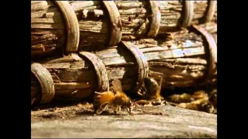 Пчёлы и алкоголь