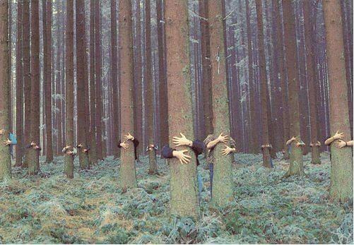 Дендротерапия — как лечиться деревьями