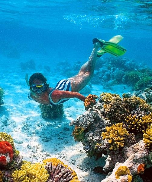 club el faraana reef resort tripadvisor