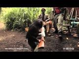 Боевики и обезьяна с автоматом АК-47 (monkey with AK-47)