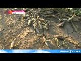 В Ставрополье обрушились полчища саранчи