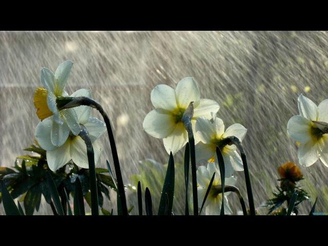 Блюз под дождём Раймонд Паулс