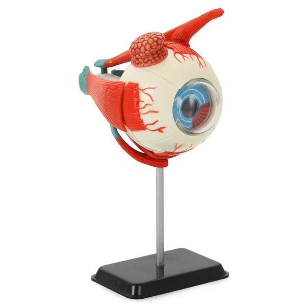 Анатомический набор (глаз)