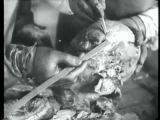 Трагедия в Катынском лесу (СССР, 1944)