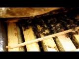 Контроль зимовки пчёл (10.01.2015)